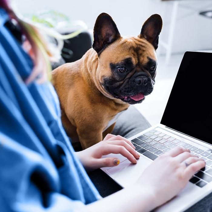Arbeiten am Laptop neben dem Haustier
